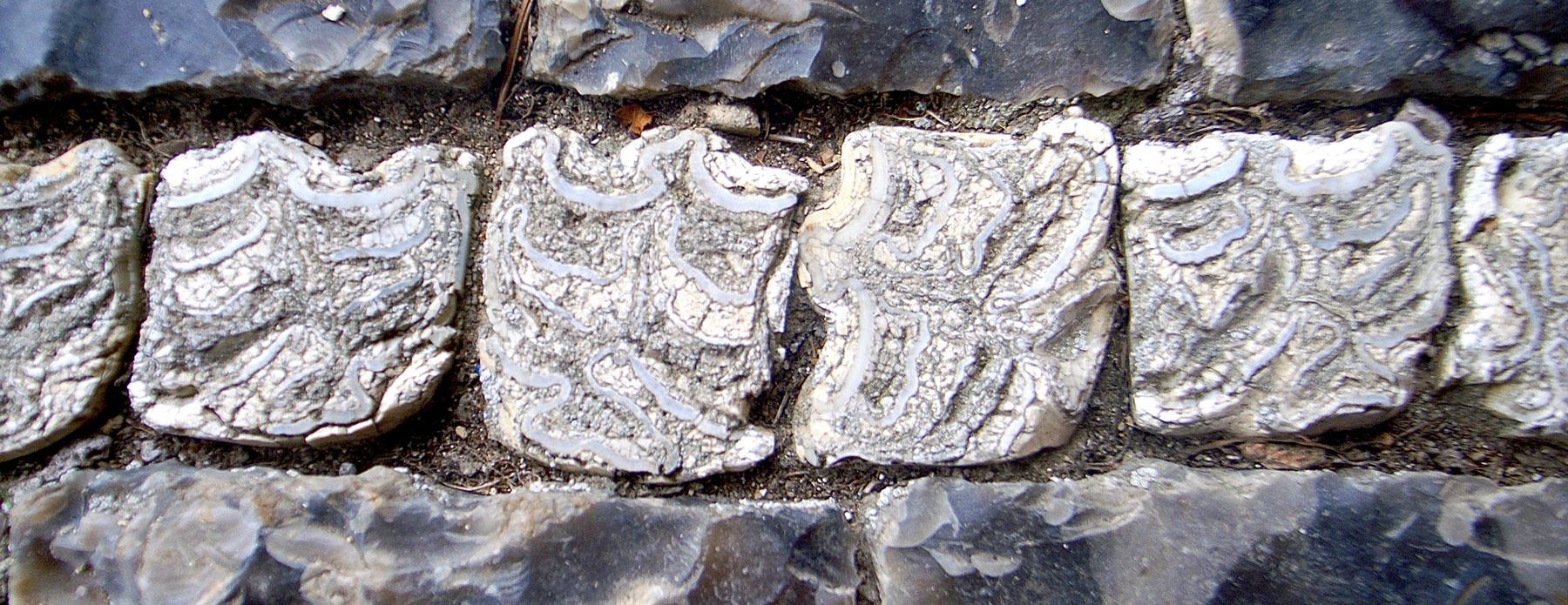 horse teeth detail in floor